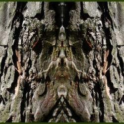 Дерево-леший