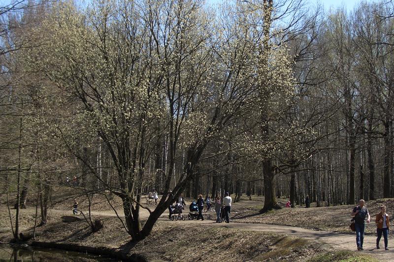 Дорожка в Тимирязевском лесопарке
