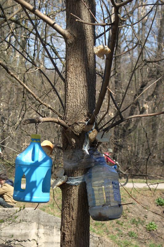 Кормушка для птиц, Тимирязевский лесопарк