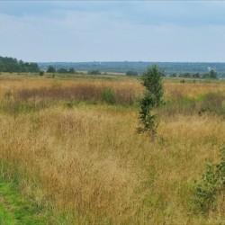 Protasovskoe-pole