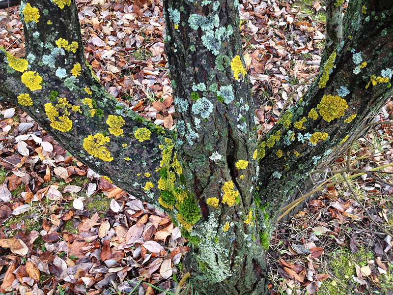 Узор ствол дерева