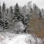 Лес в начале зимы