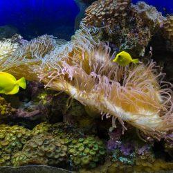 Океанариум в парке Ривьера в Сочи